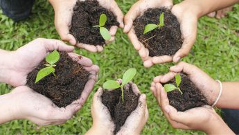 Making Tel Aviv a Green City by 2030 through Massive Tree Planting Campaign